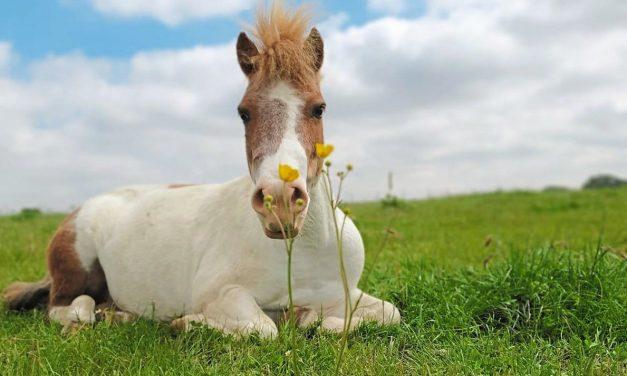 Wer quält ein blindes Pony?